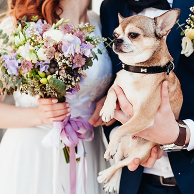 Páginas de Bodas Pet Friendly